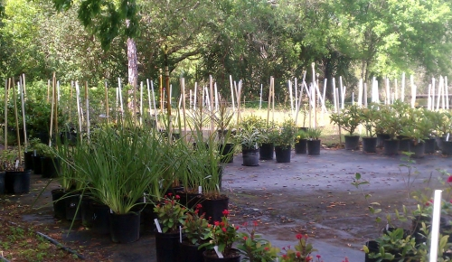 St. Lucie County Nursery