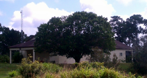 Live Oak, St Lucie Extension Office