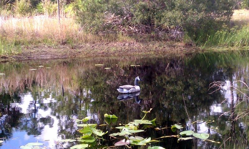Pond at IRREC Teaching Garden