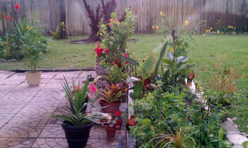 Rear Cutting Garden, March 12, 2012