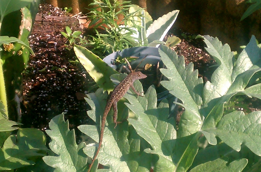 Artichoke Leaves with Lizard
