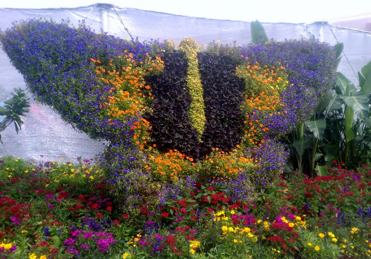 Epcot Butterfly Arrangement