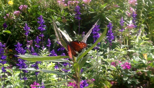 Common Crow Butterfly in Audobon Society Garden, Epcot