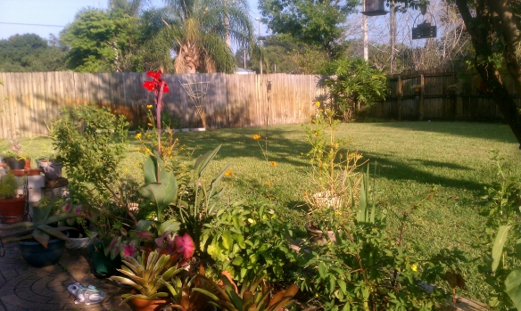 Backyard Overview,  May, 2012