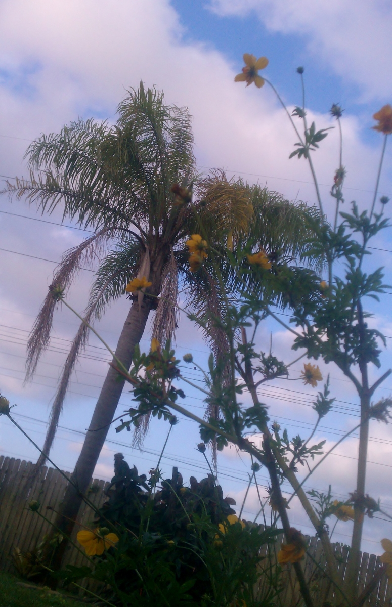 Unfocused Palm Tree with Super Cosmos
