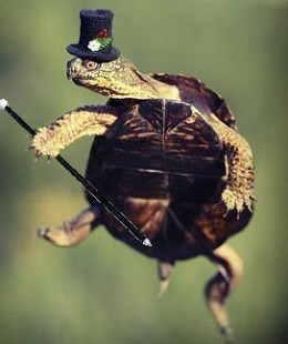 Turtle Astaire!