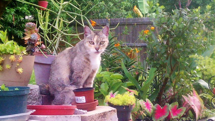 Clarisse in the Rear cutting garden, 5/31/2012