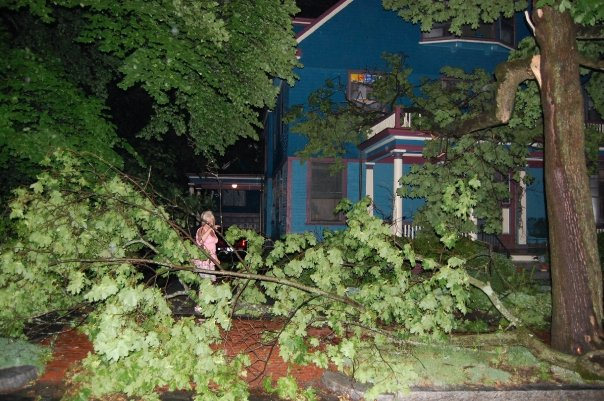 Trees felled in Microburst, June 2008
