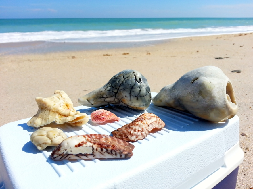 Conch and other unique shells
