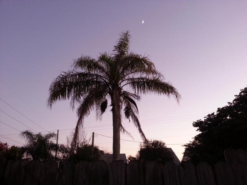 Backyard Queen Palm Silhouhette, October 20, 2012