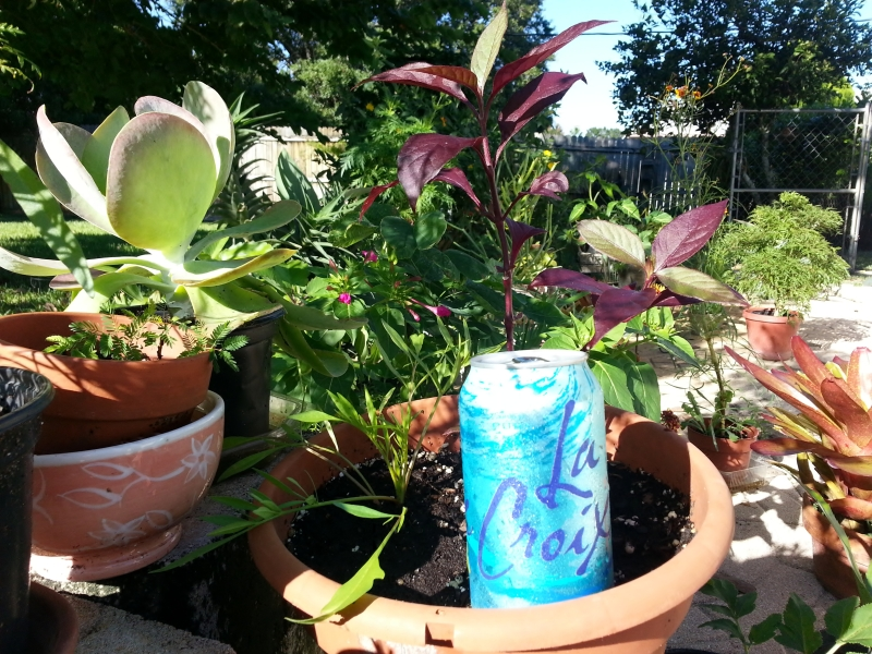 La Croix Seltzer is the BEST sizzle DIZZLE water ever!