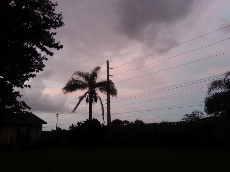 Queen Palm Silhouette 2 Oct 24, 2012