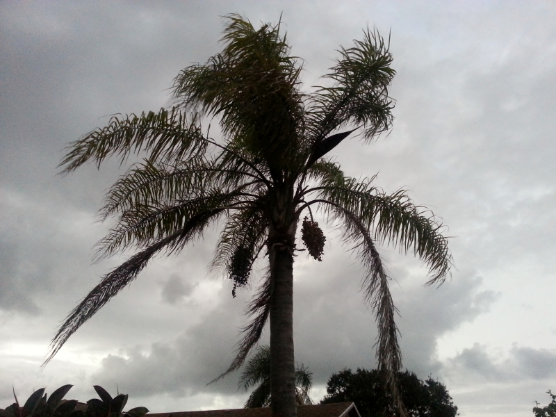 Queen Palm Silhouette 4 Oct 24, 2012