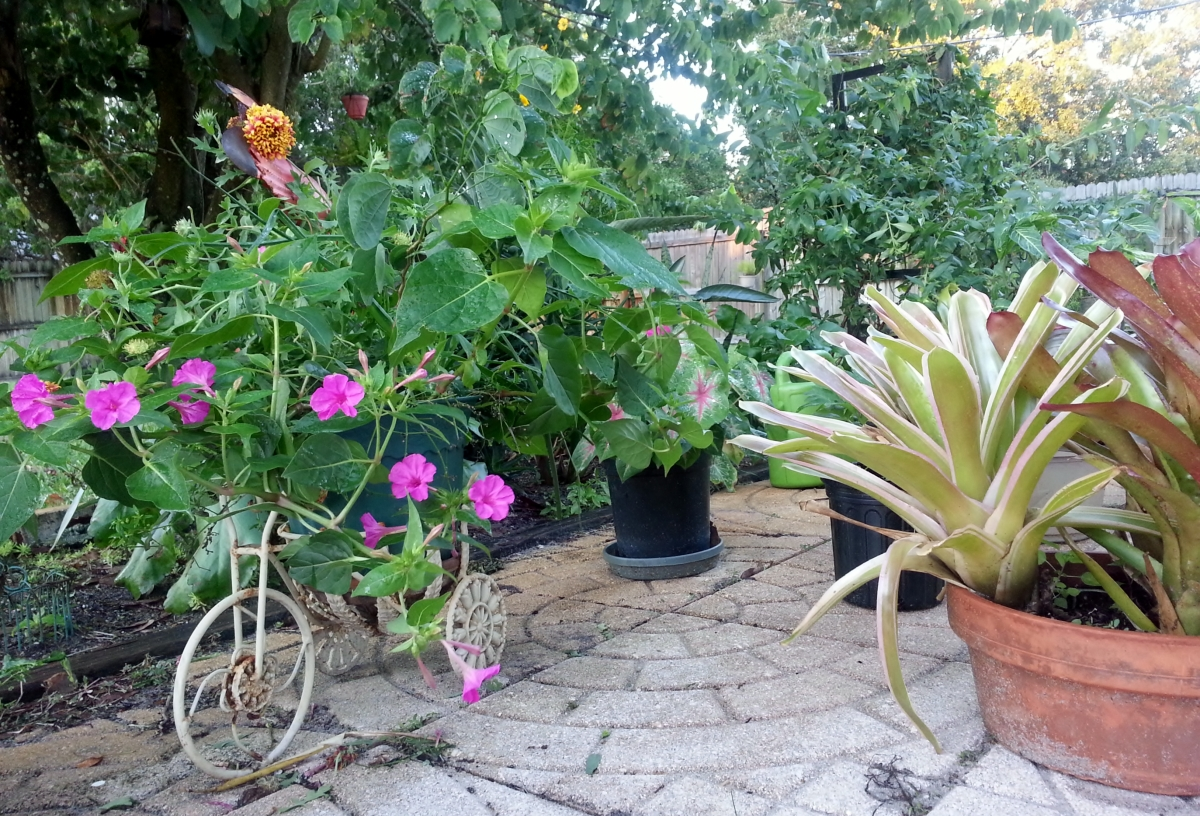 Mirabilis, Caladium. Bromeliads all intact! October 27, 2012 Vero Beach