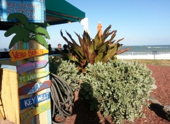 Green Tropical Plants, Mulligan's Restaurant, 11/22/12