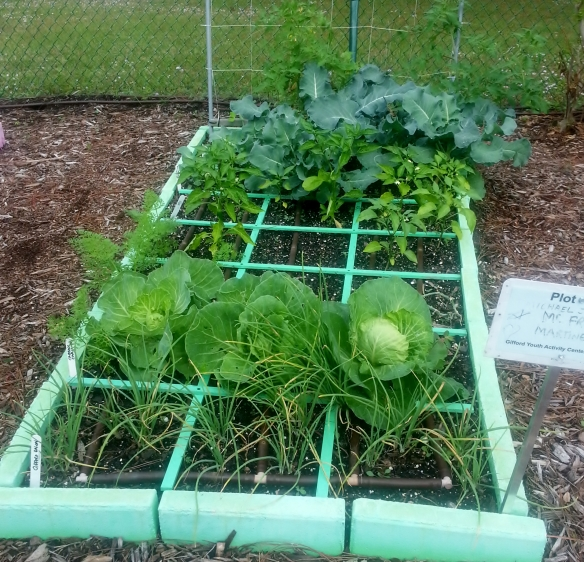Onion Raised Bed 12/11/12