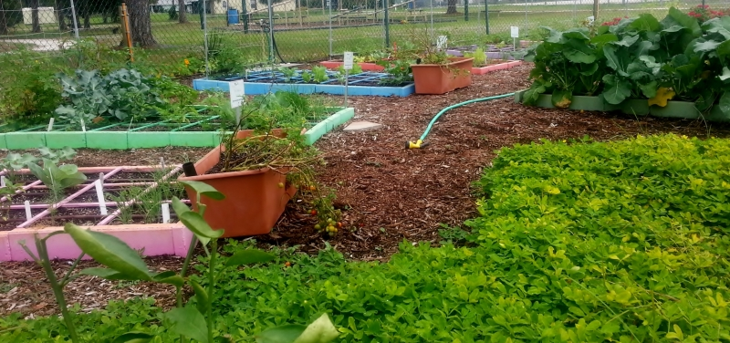 Colorful raised beds, GYAC