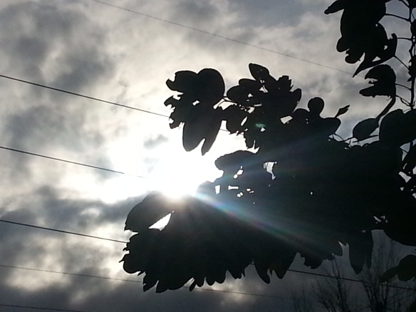 Illumination, Brazilian Pepper Tree, 1/14/13