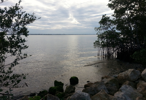 Shoreline, Indian River Lagoon, January 2013