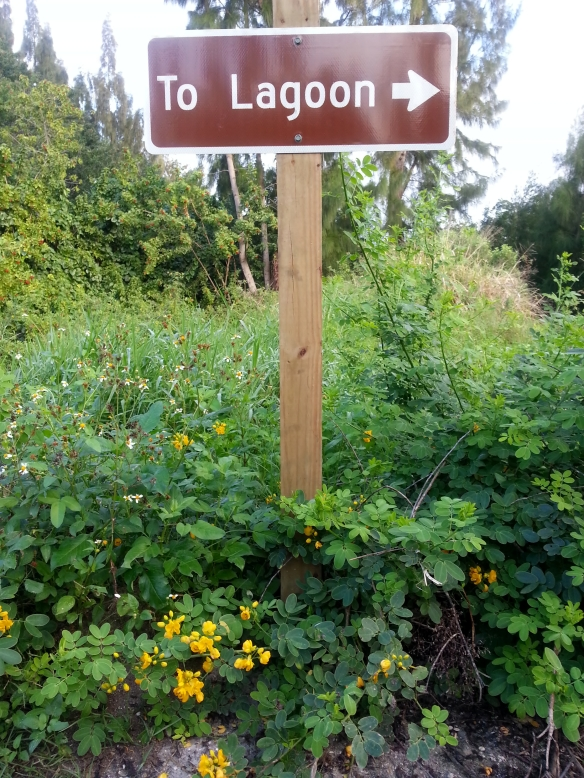 Lagoon, this way, (with cassia bicapsularis)