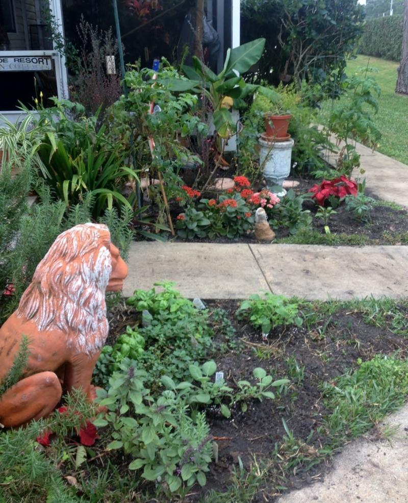 Ivana's Garden