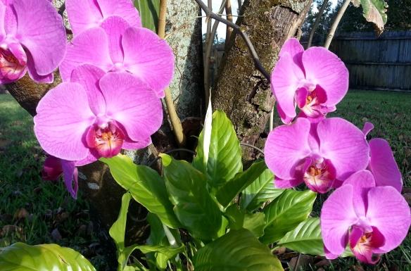 Peace Lily Spadix and Phalaenopsis, 4/23/13