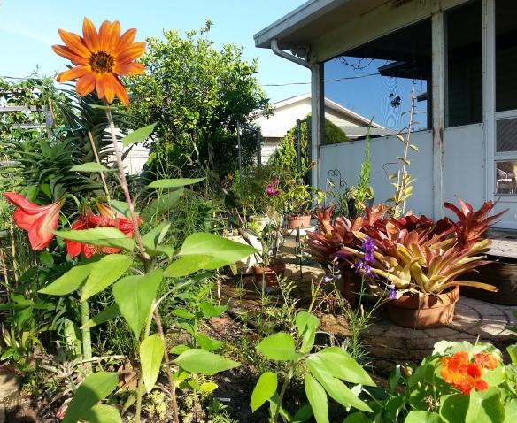 Rear Cutting Garden, 4/24/13