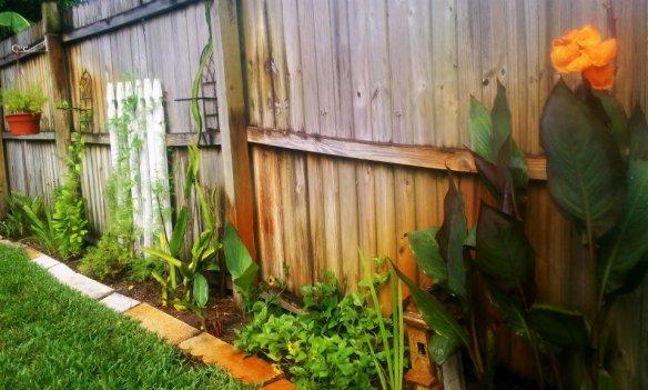 vine wall July, 2012