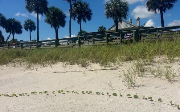 Seaside Grille at Jaycee Beach, 9/21/13