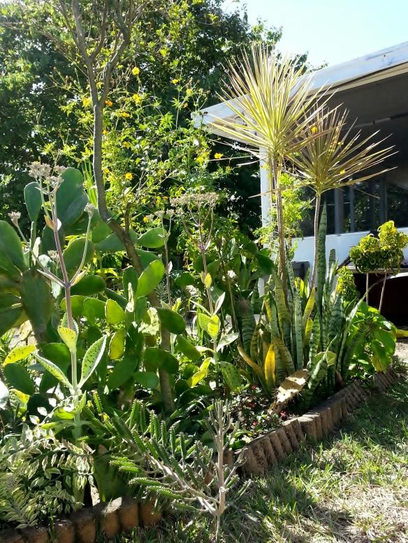 Ranchero Garden, 11/6/13