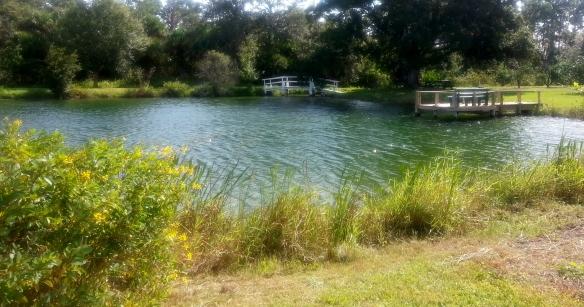 Countryside Citrus pond,  Vero Beach 11/8/13