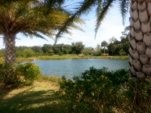 Countryside Citrus pond,  pic 2, Vero Beach 11/8/13
