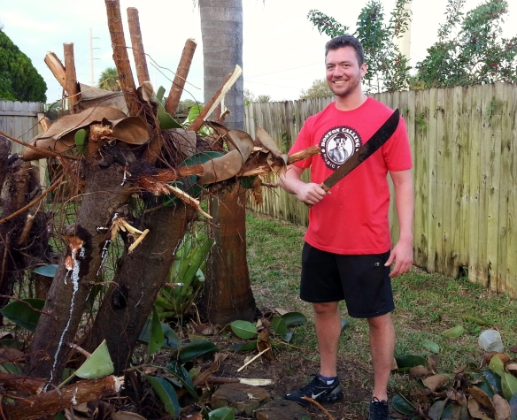 Jack pruned the rubber tree, 1/10/14