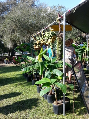 Going Bananas Vendor Area, pic 2, Gardenfest 2014