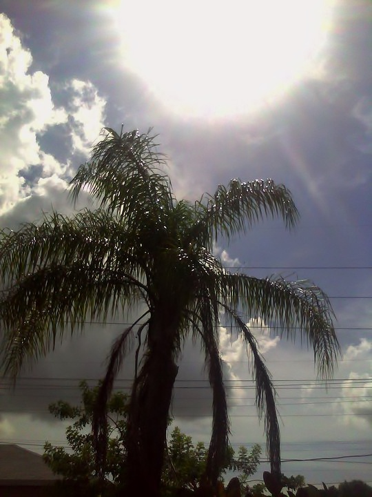 Backyard Queen Palm after a summer storm
