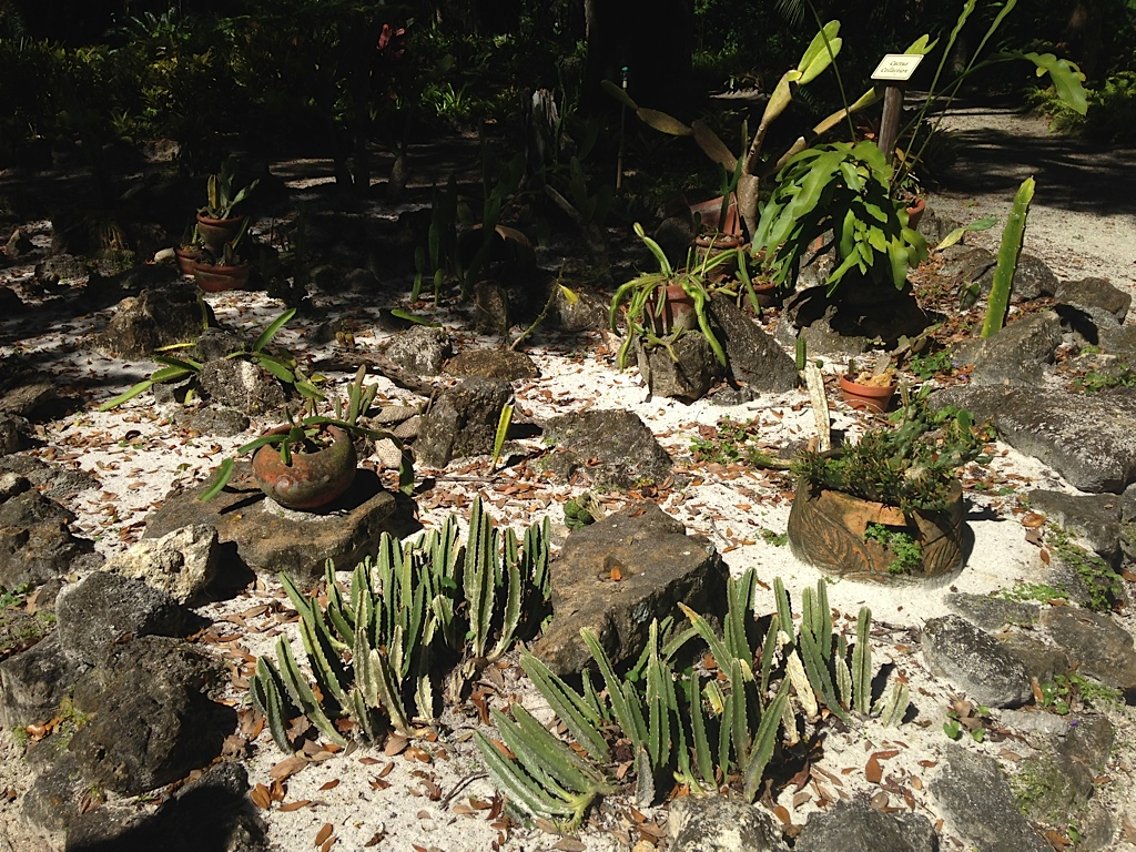 Succulent Collection, Sugar Mill Botanical Gardens, 3/8/14