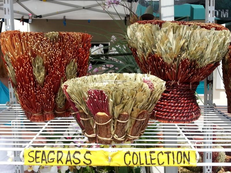 seagrass1