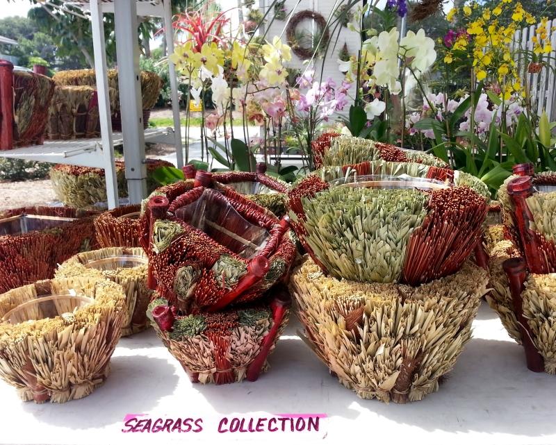 seagrass2
