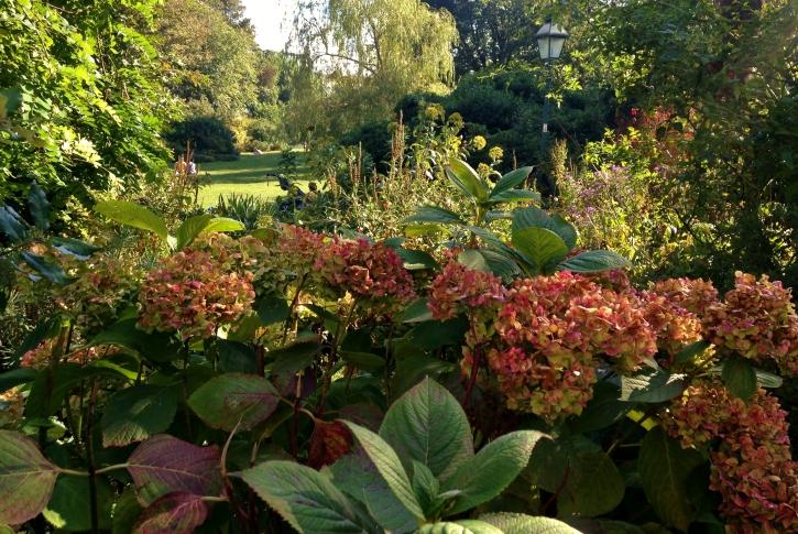 Royal Pavilion Hydrangeas
