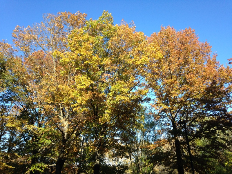End of Foliage Season, Boston, November 2014