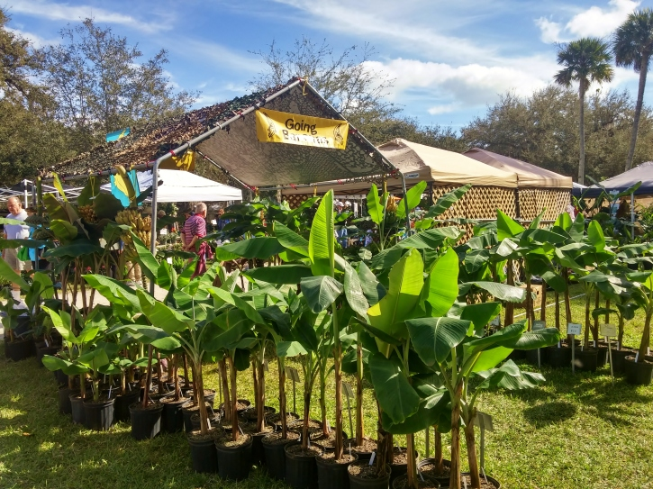 Going Bananas, Gardenfest 2015