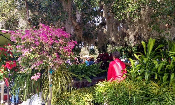 Looking through the Spanish Moss, Gardenfest 2015