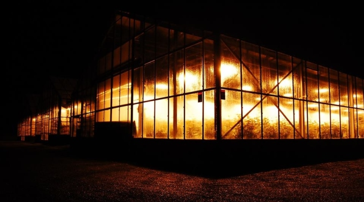 Hydroponic Greenhouse, Hveragerði